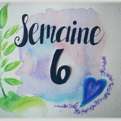 Semaine 6