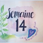 Semaine 14, grossesse