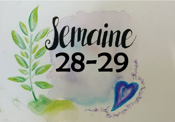 Semaines 28-29